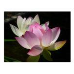 Pares de postal de las flores de Lotus