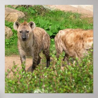 Pares de poster de los Hyenas