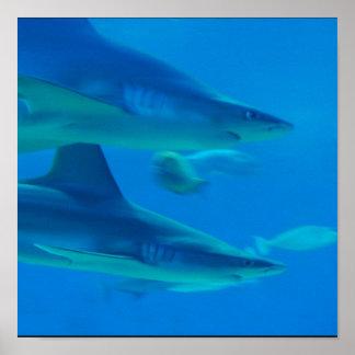 Pares de poster de los tiburones