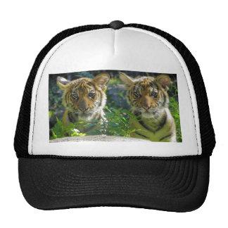 Pares de retrato de Cubs de tigre Gorro