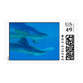 Pares de sello de los tiburones