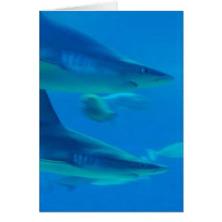 Pares de tarjetas de nota de los tiburones
