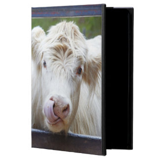 Pares de vacas blancas jovenes en el remolque de