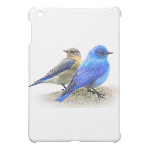 pares del bluebird, varón y bluebirds femeninos de