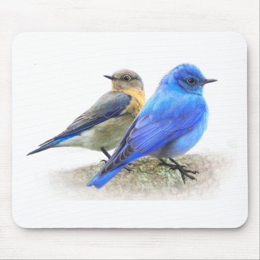 pares del bluebird, varón y bluebirds femeninos de alfombrillas de ratones