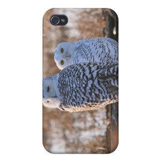 Pares del búho Nevado iPhone 4/4S Funda