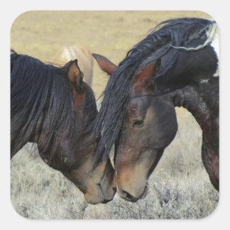Pares del caballo salvaje colcomania cuadrada