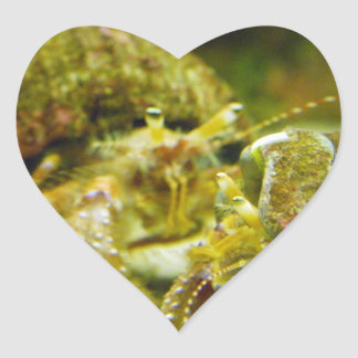 Pares del cangrejo de ermitaño pegatina en forma de corazón