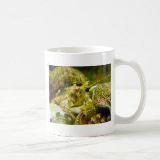 Pares del cangrejo de ermitaño taza de café