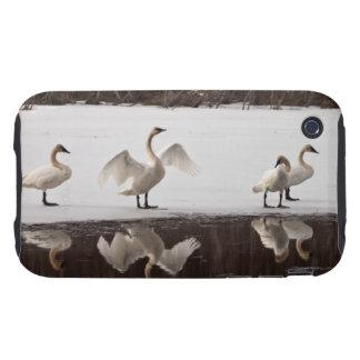 Pares del cisne de trompetista carcasa resistente para iPhone