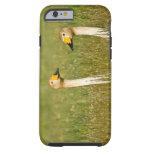 Pares del cisne de Whooper en Islandia Funda De iPhone 6 Tough