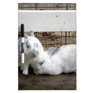 Pares del conejito pizarra blanca