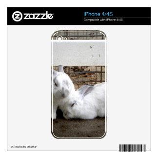 Pares del conejito skins para eliPhone 4