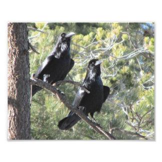 Pares del cuervo en la montaña fotografía