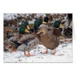 pares del duckie felicitación
