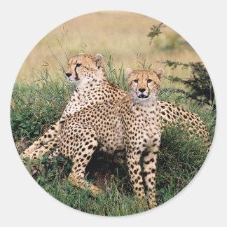 Pares del guepardo pegatina redonda