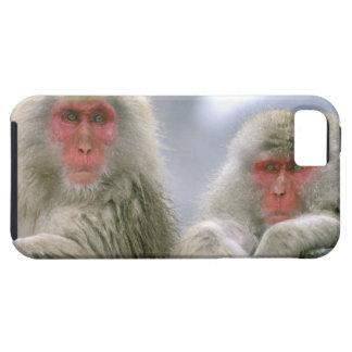 Pares del mono de la nieve, Macaque japonés, iPhone 5 Case-Mate Protector