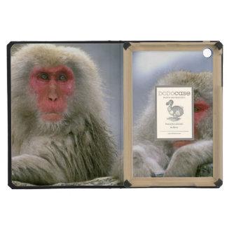 Pares del mono de la nieve, Macaque japonés,