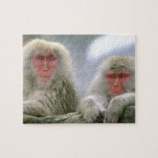Pares del mono de la nieve, Macaque japonés, Puzzle Con Fotos