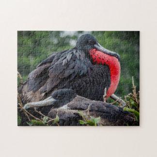 Pares del pájaro de fragata de la jerarquización puzzles con fotos