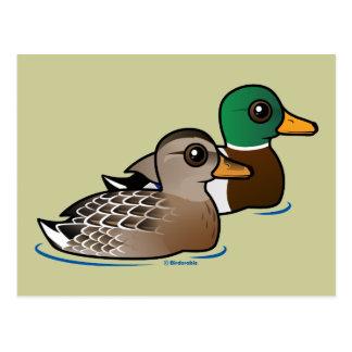 Pares del pato silvestre tarjetas postales