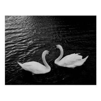 Pares del Postal-Animal-Cisne
