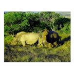 pares del rinoceronte postal