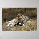 Pares del Safari-León Impresiones