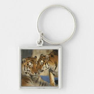 Pares del tigre llavero