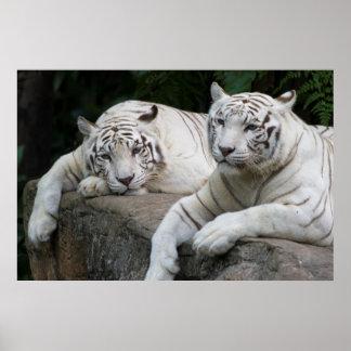 Pares del tigre impresiones