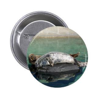 Pares grises del sello en el retrato de la roca pin