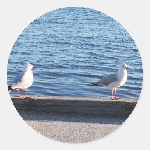 Pares hermosos de gaviotas en lados del lago etiquetas redondas