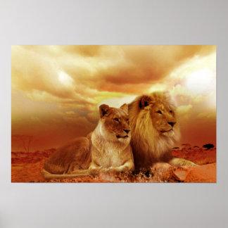 Pares hermosos del león posters
