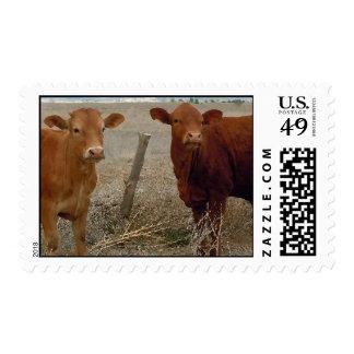 Pares jovenes lindos - vacas y cuernos rojos de la timbre postal