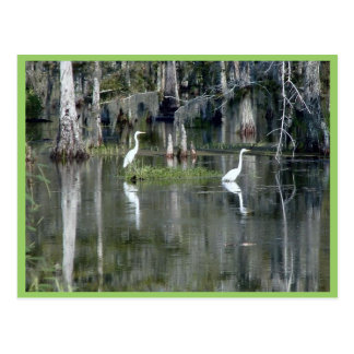 Pares lindos de garzas de Luisiana en agua cerca Postales