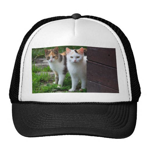 Pares lindos del gato del gatito gorra