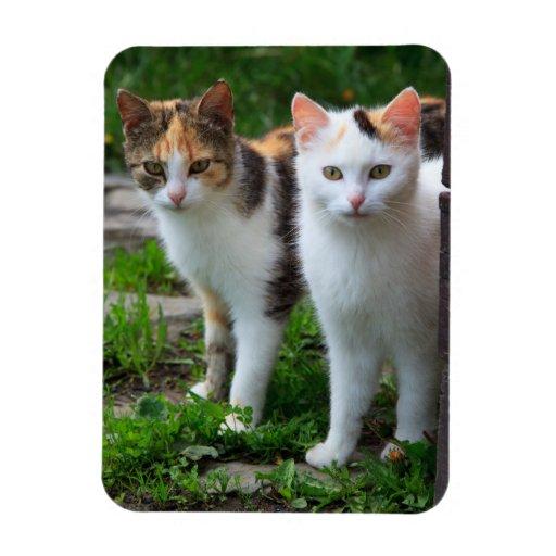 Pares lindos del gato del gatito imán rectangular