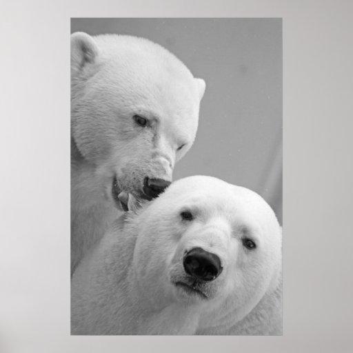Pares lindos del oso polar póster