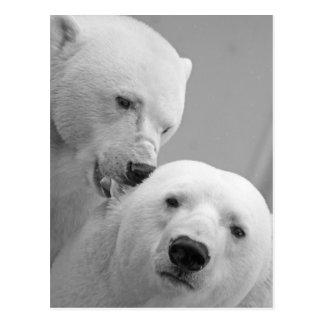 Pares lindos del oso polar tarjetas postales