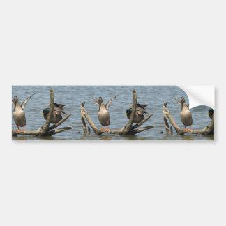 Pares lindos en los patos que se sientan con las a pegatina para auto