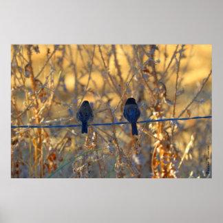 Pares románticos del pájaro del gorrión, hasta póster