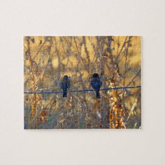 Pares románticos en un alambre, foto del pájaro puzzle