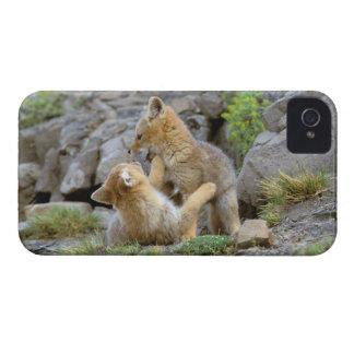 Pares suramericanos 2 del Fox gris (griseus de Lyc iPhone 4 Case-Mate Coberturas