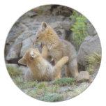 Pares suramericanos 2 del Fox gris (griseus de Lyc Platos Para Fiestas
