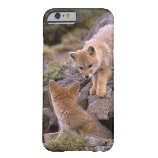 Pares suramericanos del Fox gris (griseus de Funda De iPhone 6 Barely There