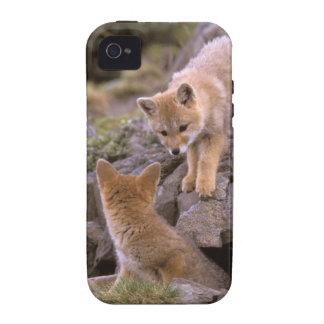 Pares suramericanos del Fox gris (griseus de Lycal Case-Mate iPhone 4 Funda