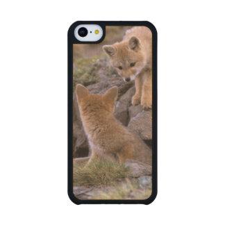 Pares suramericanos del Fox gris griseus de Funda De iPhone 5C Slim Arce