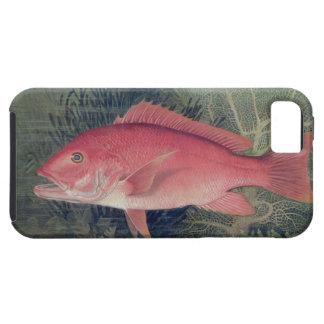 Pargo rojo, de 'pescados del estado unido funda para iPhone SE/5/5s