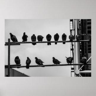 Parisian Pigeons Poster