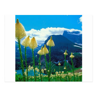 Park Beargrass Grinnell Lake Glacier Montana Postcard